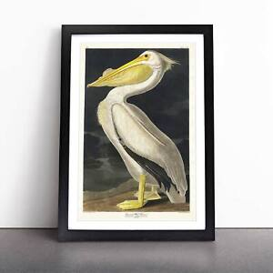 American White Pelican Bird John James Audubon Framed Picture Print Wall Art