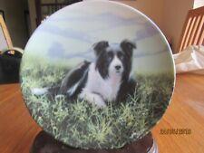 BORDER COLLIE DOG PLATE - RAMBLER'S REST - JOHN SILVER - DANBURY MINT SHEEP