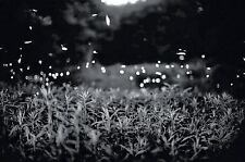 Gregory Crewdson: Fireflies-ExLibrary