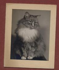 Brighton. Cat. Greetings Card photo by A J Rowell   L810