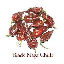 10 x Chilli Seeds - Black Naga (Chocolate King Naga) 10 seeds to cultivate.