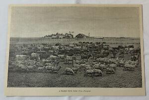 1889 magazine engraving ~ A PRAIRIE STOCK FARM in the Dakota Territory