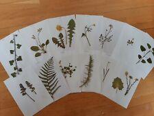 Herbarium 12 Pflanzen von 2020 !