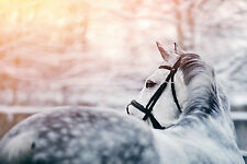 STUNNING HORSE WINTER SUNRISE FRAMED CANVAS PICTURE #39 HORSE WALL ART CANVAS
