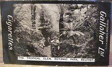 BELFAST BOTANIC GARDENS Tropical Glen GALLAHER IRISH VIEWS 224 Northern Ireland