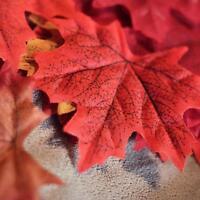 Fall Silk Leaves Wedding Favor Autumn Red Maple Leaf Decorations Ornament FM