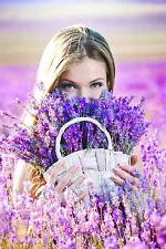 Dreamy Lavender Massage Oil 100ml
