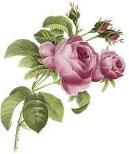 Pink Summer Rose Flower Select-A-Size Waterslide Ceramic Decals Bx