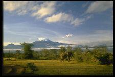 288062 Mount Kilimanjaro Amboseli Reserve A4 Photo Print