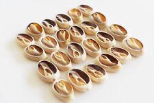 "24 Center Cut Ringtop Cowrie Shells (.5-1""/12-25mm) Beach Crafts Jewelry Hobby"