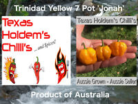 15 x Trinidad Yellow 7 Pot 'Jonah' Chilli Seeds - 15 Chili seeds per pack