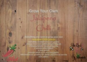 Grow Your Own jalapeno Chilli Kit - Chili Pepper