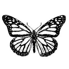 Monarch Butterfly unmounted rubber stamp, bug, summer, Sweet Grass Stamps #9