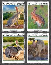 Angola 2019 fauna Cape hare   S202001