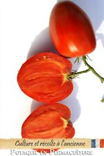 Tomate Cœur de boeuf « Reif Red » 20 graines méthode Bio