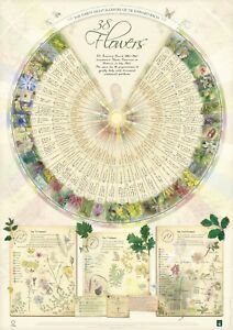 Bach Flower Poster Wall Chart for the 38 Essences Remedies Large A1 Botanical
