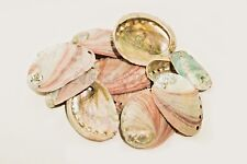 "Red Abalone Sea Shell One Side Polished Beach Craft 2 1/2"" - 4"" (12 pcs)"