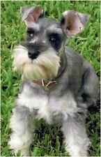 Miniature Schnauzer Counted Cross Stitch Pattern Design Chart Dog