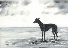 A Whippet greyhound dog  Watercolour  painting By Bridgette lee