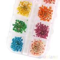 HK- 36Pcs 12 Colors Real Dried Flowers DIY Nail Art Tips Stickers Manicure Decor