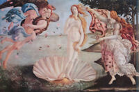 POSTER:FANTASY: BIRTH OF VENUS by BOTTICELLI  - FREE SHIPPING   #AP651  RAP131 B