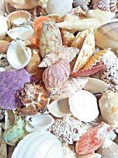 Mixed Sea Shells 450g Large Aquarium Craft Beach Indian Table Wedding Decoration