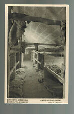 Mint 1952 Auschwitz Concentration Camp real picture Postcard Women Barracks RPPC