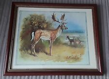 """11"""" x 9"""" Fallow Deer Picture"""