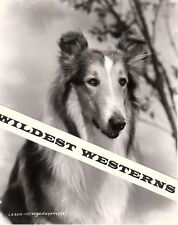 Rare Lassie photo Mgm Son of Lassie Beautiful Rough Collie Dog
