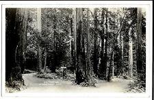 Big Tree Inn, La Honda Canyon, California RP PPC, Unposted