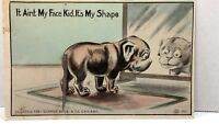 1911 Dog Spring Tail postcard Chicago