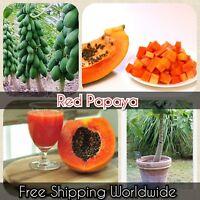 Red Papaya Seeds Rare Dwarf Papaya Fruit Plants Outdoor Sweet Delicious Fruit