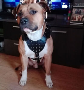 Spiked Studded PU Leather Pet Dog Harness Vest for Pitbull Mastiff Boxer