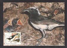 1991 CYPRUS WHEATEAR OENANTHE CYPRIACA,SKALIFOURTA NICE MAXIMUM POSTCARD.BIRDS