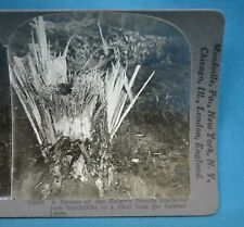 WW1 Stereoview Photo Tree Shattered Into Toothpicks By Russian Shell Keystone