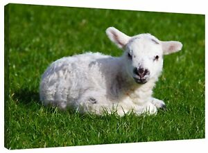 Cute Lamb Canvas Wall Art Picture Print also in Black and White or Sepia Brown