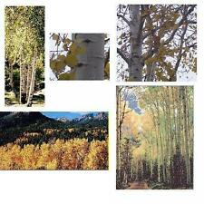 1 Quaking Aspen Tree - Larger/Older, Fast Growing Hardwood - Plan for Fall