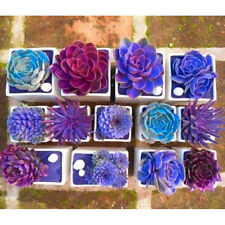 AG_ 200Pc Mixed Rare Beauty Succulent Easy to Grow Potted Garden Flower Seeds Tr