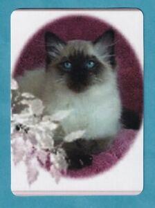 Beautiful Ragdoll Cat  -- Modern Linen Wide Swap Playing Card