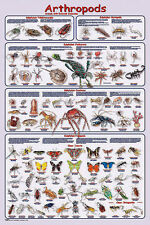 Arthropods Laminated Educational Science Teacher Classroom Chart Poster 24x36