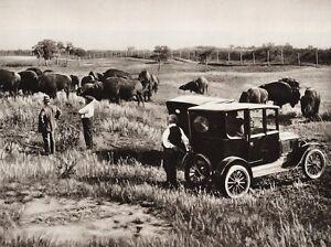 1925 Vintage CANADA ~ Wainwright Alberta Landscape Ranch Bull Car Men Photo Art
