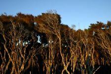 Natur, Beruhigend & Antiseptisch Tee Baum & Manuka Creme 50ml