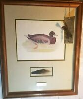 "Vintage Watercolor Painting Mallard Duck Print with Feathers 22"" x 18"" Framed"