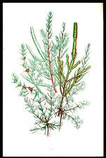 1866 Anne Pratt Botanical Print Leaf Lot (3) Plants Grasses Sedges & Ferns