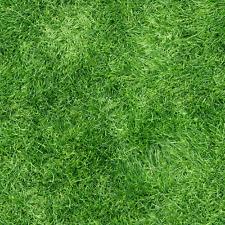 SeedRanch Pensacola Bahia Grass Seed  - 10 Lbs.