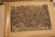 """Stefano Della Bella """"Tree House at Villa Pratolino"""" - Etching ca. 1653"""