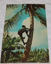 Vintage Guadeloupe French Antilles Postcard Black Villager Climbing Coconut Tree