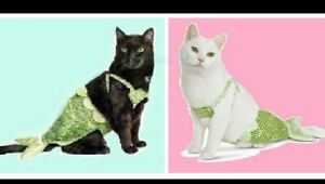 """PetCo""""Bootique""""Mermaid""""XS/S Dog O/S Cat Halloween Costume Green Shell Tail LIME"""
