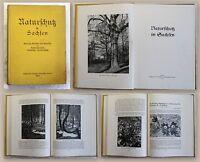 Landesverein Sächsischer Heimatschutz Naturschutz in Sachsen 1929 illustriert xz