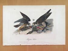 Peregrine Falcon  JJ AUDUBON, Plate 20,1st Ed Octavo 1840 Antique Original Print